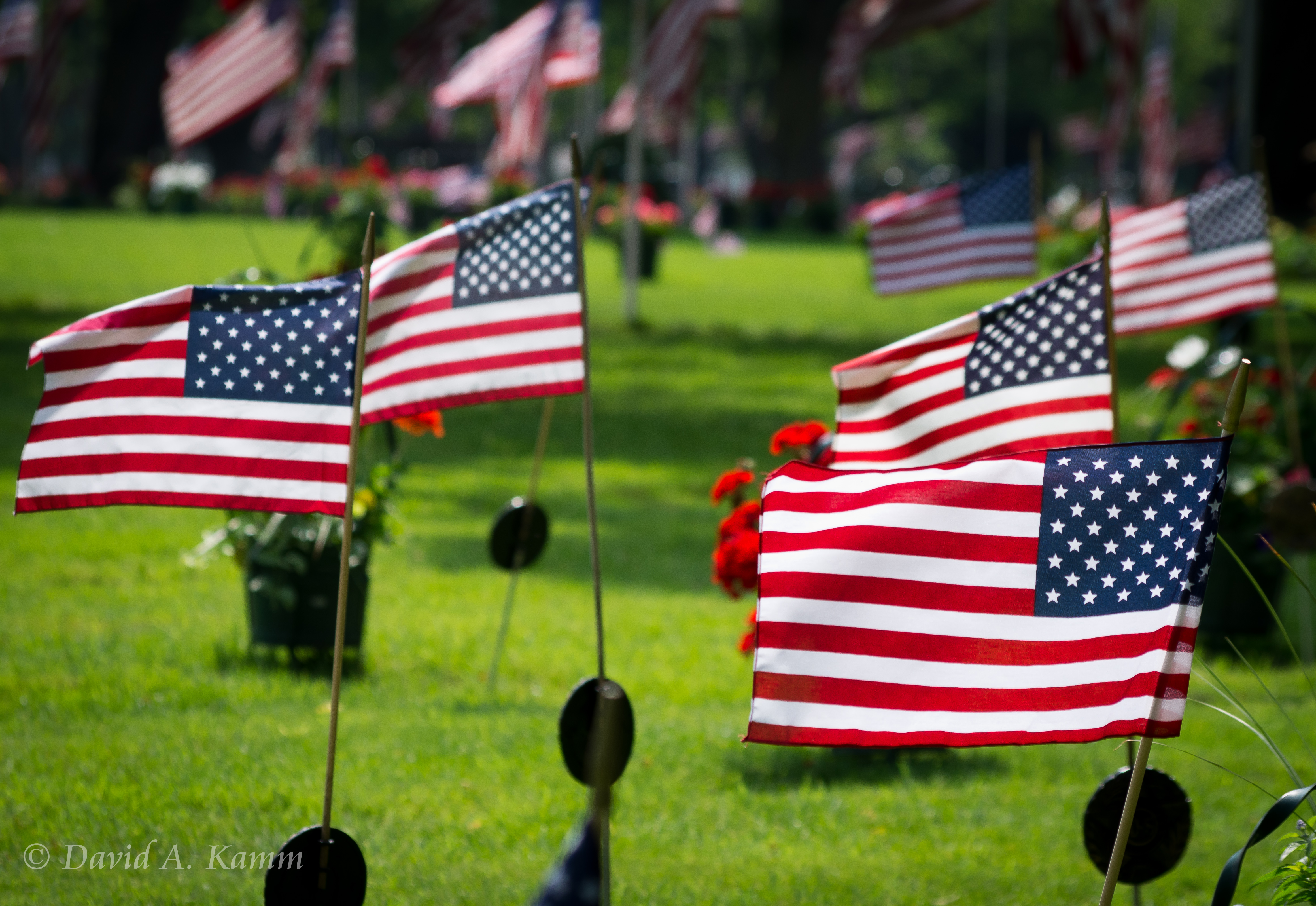 Image: Memorial Day Cemetery Flags