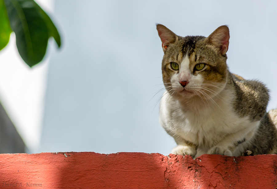 Cat on Red Wall (Cancun, Mexico)