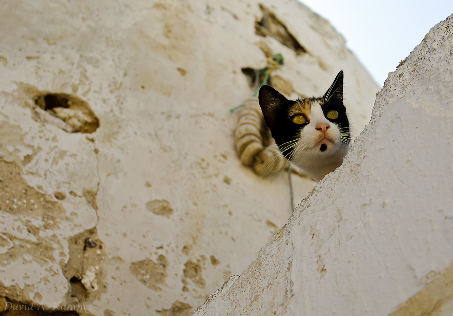 Peering Cat on Rooftop - Naxos, Greece