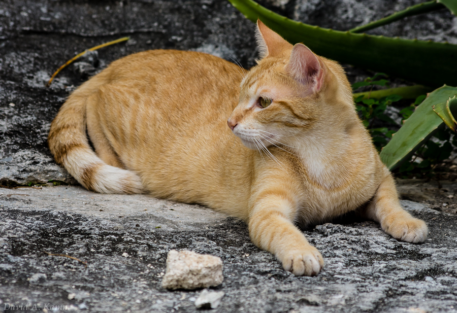 Cat on Residential Street - Cancun, Mexico